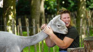 Tine van Wezel - Beroep - Alpaca's - DSC07521