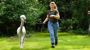 Tine van Wezel - Beroep - Alpaca's - DSC07572