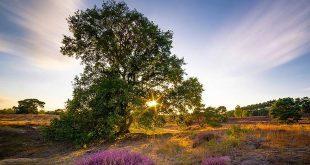 Rook- en vuurverbod in natuurgebieden opgeheven