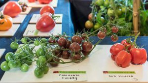 Tomatenfestival Arboretum Kalmthout2