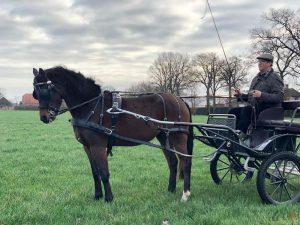 Toon Cools - Hobby paarden en pony's mennen - Noordernieuws.be 2020 - 2020-08-24-20-42-55
