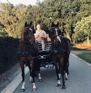 Toon Cools - Hobby paarden en pony's mennen - Noordernieuws.be 2020 - image00001