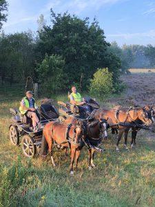 Toon Cools - Hobby paarden en pony's mennen - Noordernieuws.be 2020 - image00006