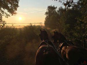 Toon Cools - Hobby paarden en pony's mennen - Noordernieuws.be 2020 - image00007