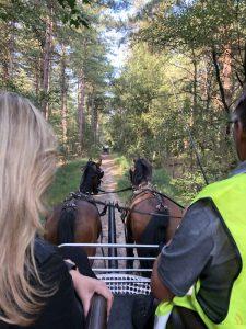 Toon Cools - Hobby paarden en pony's mennen - Noordernieuws.be 2020 - image00008