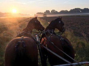 Toon Cools - Hobby paarden en pony's mennen - Noordernieuws.be 2020 - image00009
