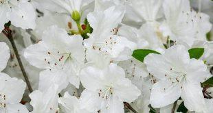 Digitale plantjesverkoop voor Kom op tegen Kanker