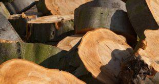 Dunningswerken in de Horendonkse bossen