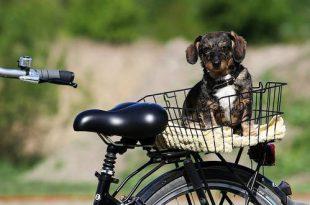 Geef je mening over de fietsstraten in Kalmthout