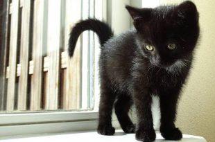 Kantelramen levensgevaarlijk voor je kat!