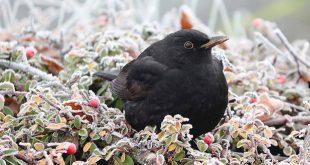 Zo help je de vogels de winter door2