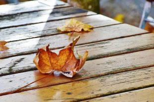 November dit kan je nog doen in de tuin