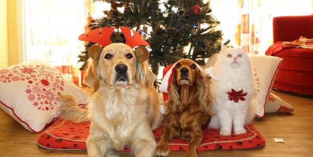 De feestdagen, hoe positief kijken we er tegenaan