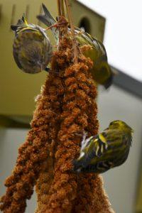 Dirk De Rycke vogelliefhebber - Hobby vogels - Alleen natuurlijke voeders