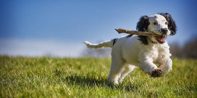 Essen heeft vijfde hondenspeelzone