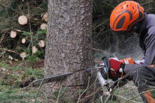 Gemeente werkt aan duurzaam bosbeheer in Horendonkse bossen