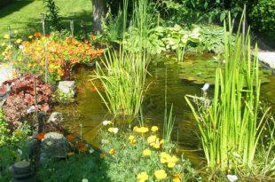 Groen of bruin vijverwater helder krijgen