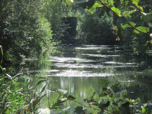 GroenRand viert 'Wereld Wetlands Dag'2