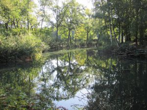 GroenRand viert 'Wereld Wetlands Dag'3