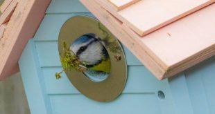 Waar en hoe hang je een nestkast voor vogels op