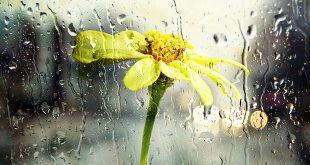 Bestel jouw ideale regenwaterton op het recyclagepark
