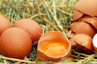 Eierschalen gooi ze niet meer weg, gebruik ze in je tuin!