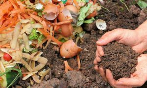 Eierschalen gooi ze niet meer weg, gebruik ze in je tuin!3