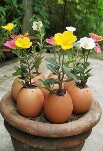 Eierschalen gooi ze niet meer weg, gebruik ze in je tuin!4