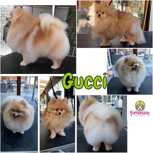Kathleen FurFection - Gucci