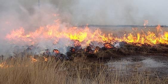 Gemeenten Brecht en Wuustwezel bekomen van grootse brand
