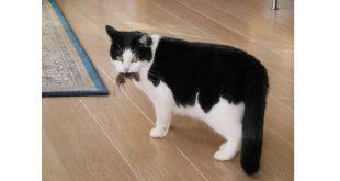Hou muizen uit je huis: vier tips