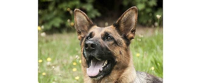 Diensthond speurt inbreker op