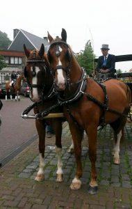 Gerard Rijper - Paardenmenner - Paarden met koets op Heuvelplein Essen