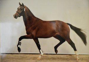 Gerard Rijper - Paardenmenner - Prijzen - HDB_3544s