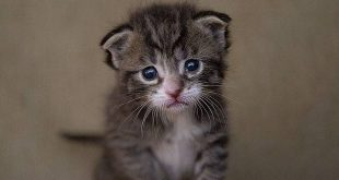 Zogenaamde dierenvriend deelt te jonge kittens uit op caféterras2