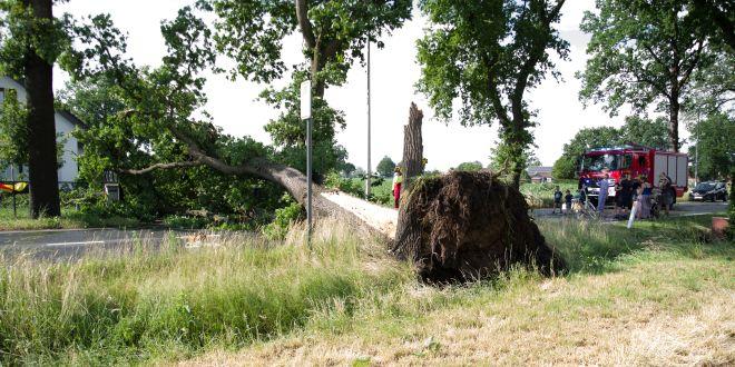 Kort maar heftig noodweer rukt bomen uit de grond