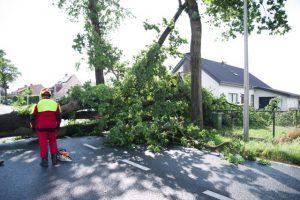 Kort maar heftig noodweer rukt bomen uit de grond2
