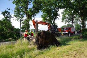 Kort maar heftig noodweer rukt bomen uit de grond3