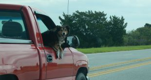 Reizen met je hond of kat: dit zegt de wetgeving