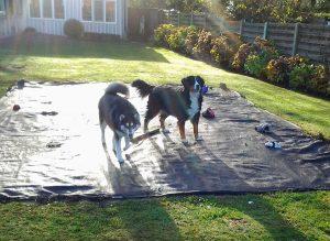 Lady en Barouchka - Christel Nelen - Hobby honden - Husky en Malamute - (c) Noordernieuws.be 2021 - 20131202_111130s80