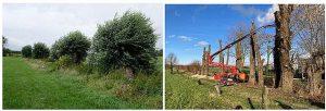 Onderhoud kleine landschapselementen ruilverkaveling Nieuwmoer na 20 jaar hervat