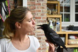 Wendy Adriaens - Hobby Dieren - Struisvogels - HDB_4164