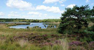Grenspark Kalmthoutse Heide stelt zich kandidaat als Vlaams Nationaal Park