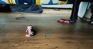 Stop het zwerfkattenprobleem en voorkom ernstig dierenleed!