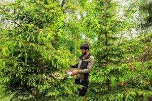 Tweede Arboretum Gin voor tuinuitbreiding3