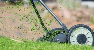 Gazons minder maaien is een stevige bonus voor insecten